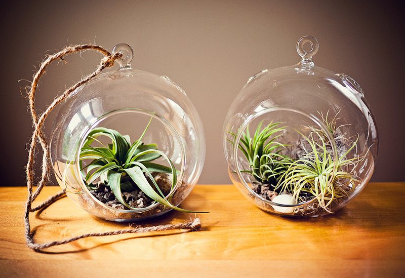 How To Make An Air Plant Terrarium For Keeps Blog