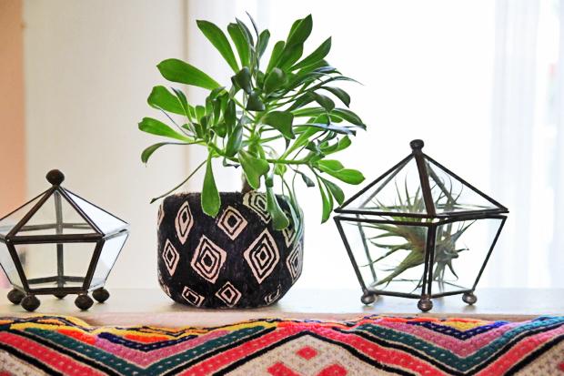 DIY young coconut planter
