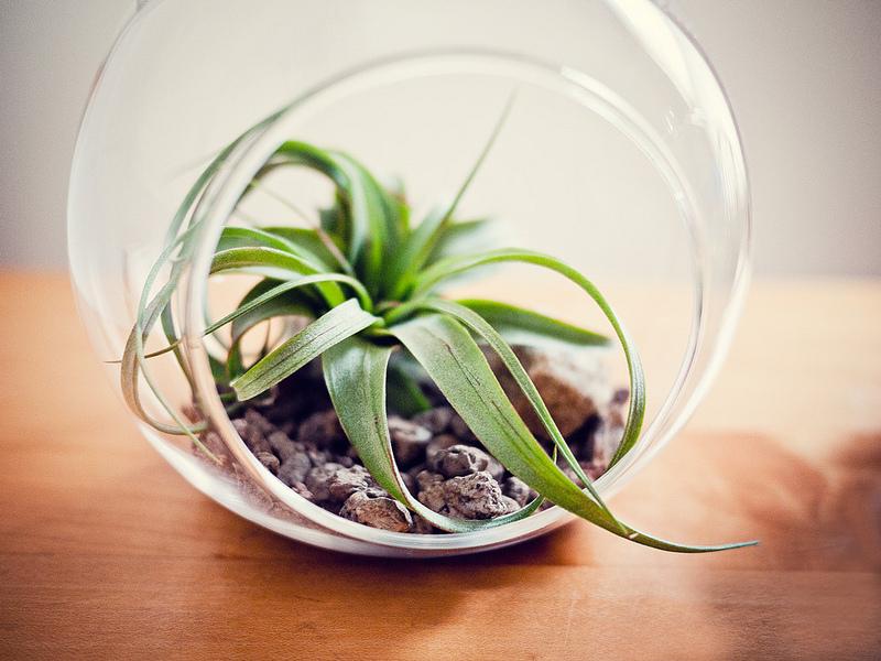 how to make an air plant terrarium