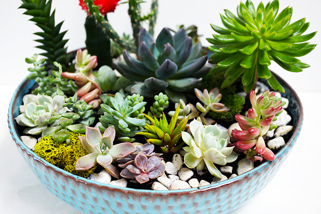 How to make a succulent and cactus planter bowl